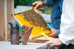 Beekeeper holding frame of honeycomb with working bees outdoor Royalty Free Stock Image