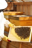 Beekeeper is holding a frame Royalty Free Stock Image