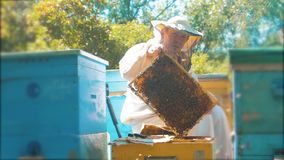 Beekeeper holding a honeycomb full of bees. Beekeeper inspecting honeycomb frame at apiary. Beekeeping concept slow. Motion video. beekeeper holding honeycomb stock footage