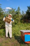 Beekeeper with honeycomb in the apiary stock images