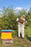 Beekeeper with honeycomb in the apiary royalty free stock photos