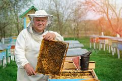 Beekeeper holding a honeycomb full of bees. Beekeeper in protective workwear inspecting honeycomb frame at apiary. Works. On the apiaries in the spring Royalty Free Stock Image