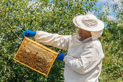 Beekeeper holding a honeycomb Royalty Free Stock Image