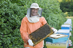 Beekeeper Holding Honeycomb With Honey Bees Royalty Free Stock Photo