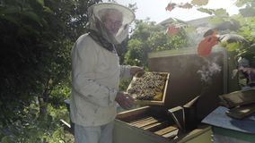 Beekeeper holding honeycombs and standing near open bee hive in the garden stock video