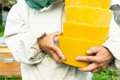 A beekeeper is holding a wax in round shapes. Beekeeping work on the apiary. Selective focus. Horizontal frame stock images