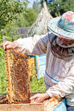 Beekeeper holds in hand a frame with honey Stock Photo