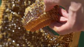 The beekeeper holds a piece of honey in his hand. Honey is fluttering in honeycombs. Macro. Slow motion.