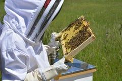 Beekeeper and honey bee hive Stock Photo