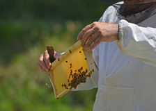 Beekeeper with honey comb Stock Photography
