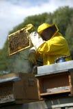 Beekeeper With Honeycomb Stock Image