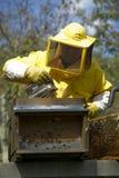 Beekeeper With Honeycomb Stock Photography