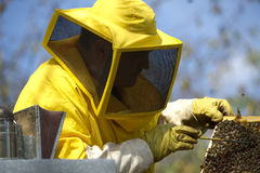 Beekeeper With Honeycomb Royalty Free Stock Images