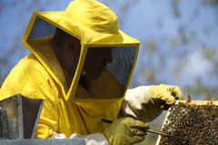 Beekeeper With Honeycomb Stock Images
