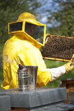 Beekeeper With Honeycomb Stock Photos