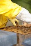 Beekeeper With Honeycomb Stock Photos
