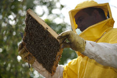 Beekeeper With Honeycomb Stock Image