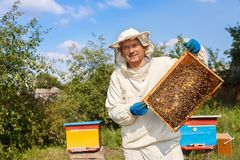 Beekeeper with honeycomb in the apiary stock image
