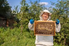 Beekeeper with honeycomb. Closeup portrait of beekeeper holding a honeycomb full of bees. Beekeeper in protective workwear inspecting honeycomb frame at apiary stock image