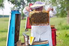 Beekeeper with honeycombs Royalty Free Stock Photography