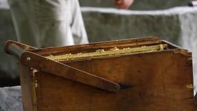 Beekeeper with honeycombs stock video