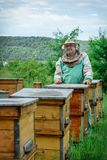 Beekeeper i en bikupa nära bikuporna Biodling _ Royaltyfri Bild