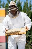 Beekeeper Inspecting Honeycomb Frame At Apiary Stock Images