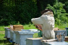 Beekeeper inspecting honeycomb frame at apiary at the summer day. Man working in apiary. Apiculture. Beekeeping concept. Beekeeper inspecting honeycomb frame at royalty free stock image