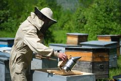 Beekeeper inspecting honeycomb frame at apiary at the summer day. Man working in apiary. Apiculture. Beekeeping concept. Beekeeper inspecting honeycomb frame at royalty free stock images