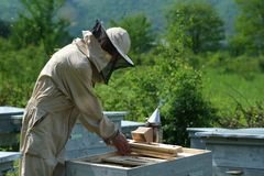 Beekeeper inspecting honeycomb frame at apiary at the summer day. Man working in apiary. Apiculture. Beekeeping concept. Beekeeper inspecting honeycomb frame at stock photography