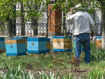 A beekeeper inspecting the wooden bee hives in spring garden. A beekeeper inspecting the wooden bee hives in spring garden royalty free stock image