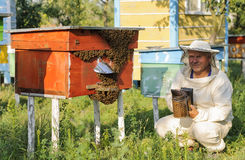 Beekeeper inspects the apiary hive of bees Royalty Free Stock Photo