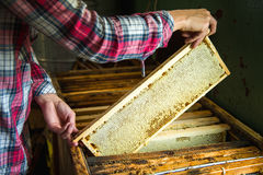 The beekeeper keeps a frame with honey sealed with wax Stock Photography