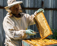 The beekeeper keeps in his hands wax frame with honey. The beekeeper keeps the wax frame with ahoney Royalty Free Stock Images