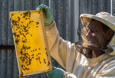 The beekeeper keeps in his hands wax frame with honey. The beekeeper keeps the wax frame with ahoney Stock Photo