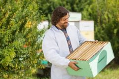 Beekeeper Looking At Crate Full Of Honeycombs Royalty Free Stock Images