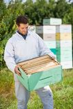 Beekeeper Looking At Honeycomb Crate Stock Images