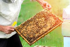 The beekeeper looks at the bee in the hive. The beekeeper looks at the bee in the hive Stock Photography