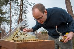 Beekeeper looks after his bee colony by lifting a plastic cover. Beekeeper checks a beehive after the cold winter time. He lifts a plastic protection cover to Stock Photos