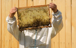 Beekeeper looks for honey on the apiary Stock Images