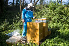 Beekeeper making fresh golden honey bees healthy Stock Photography