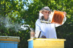 Beekeeper making inspection in apiary Stock Image