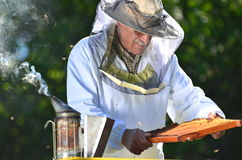 Beekeeper making inspection in apiary Stock Images