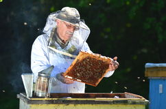 Beekeeper making inspection in apiary Stock Photos
