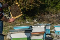 Beekeeper med bikupan Royaltyfri Foto