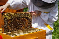 Beekeeper med bin Arkivfoto