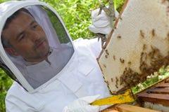Beekeeper med den förseglade ramen Arkivbilder