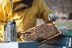Beekeeper med hans bin Royaltyfri Bild