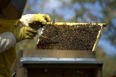 Beekeeper med honungskakan Arkivfoton