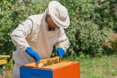 Beekeeper med honungskakan Arkivbild